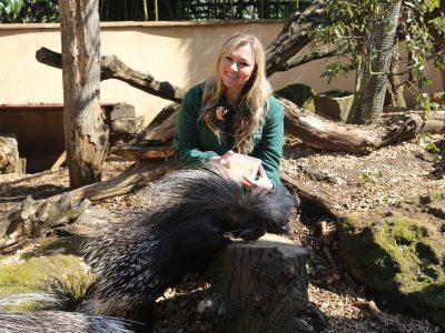 Animal Adventure porcupines (c) ZSL_WEB