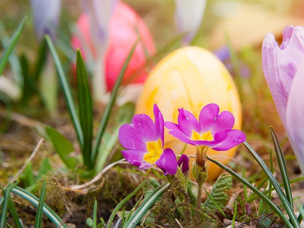 Easter-WEB