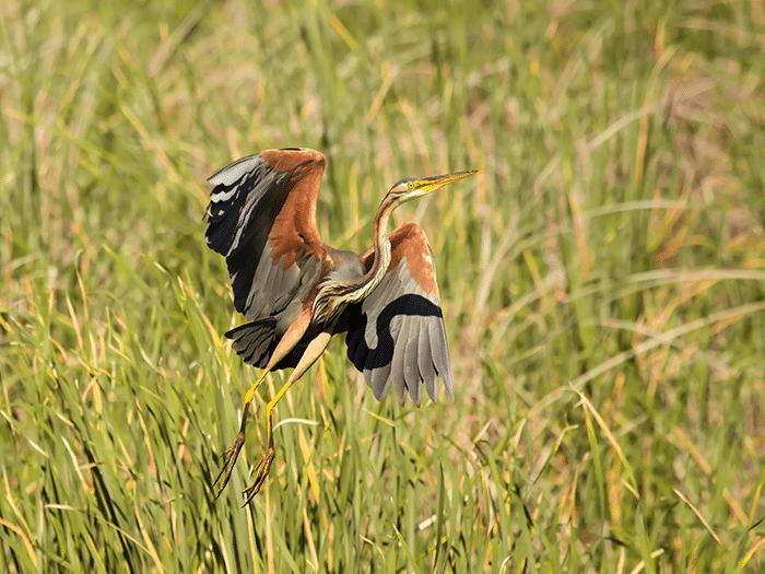Ewan Jones wildlife photography