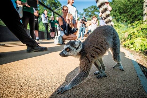 jason_brown_-_guests_in_lemur_loop_(6)_20032019155738